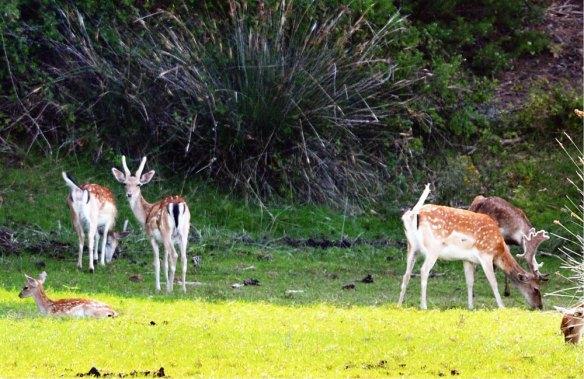 1-Ciervos y gamos en Doñana-metirta.online