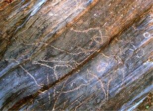2-Petroglifos de animales en el yacimiento de Siega Verde