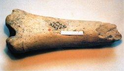 35-Hueso del género Homo de los yacimientos de Axash. África