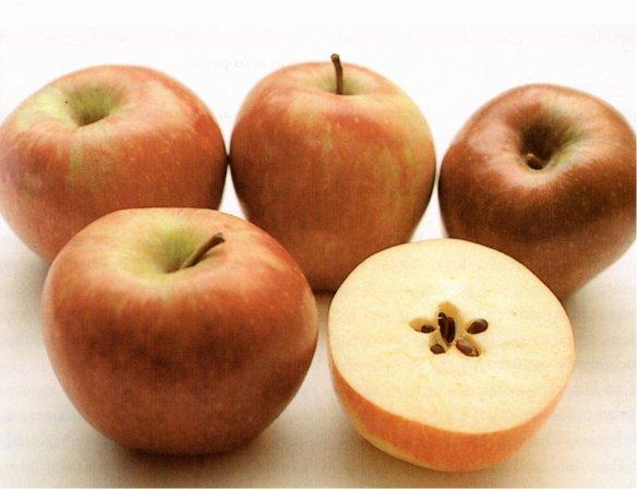 26-manzanas.metirta.online