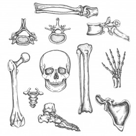 13-Huesos