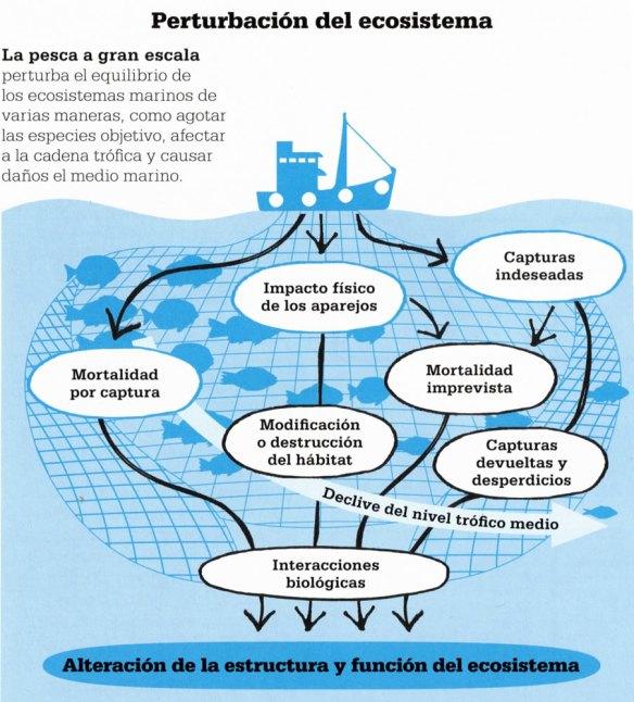 2-Perturbación del ecosistema.metirta.online