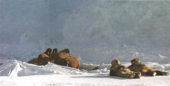 1-morsas en Groenlandia-metirta.online