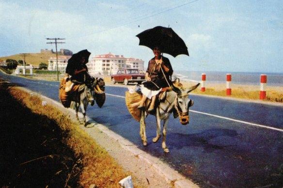 14-Alicante 1964.matirta.online