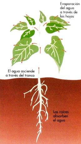 2-Plantas en el ciclo del agua.metirta.online