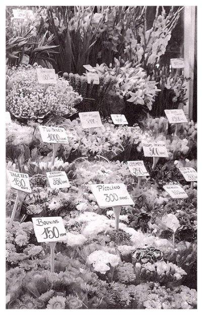 4-Las flores de las ramblas.metirta.online