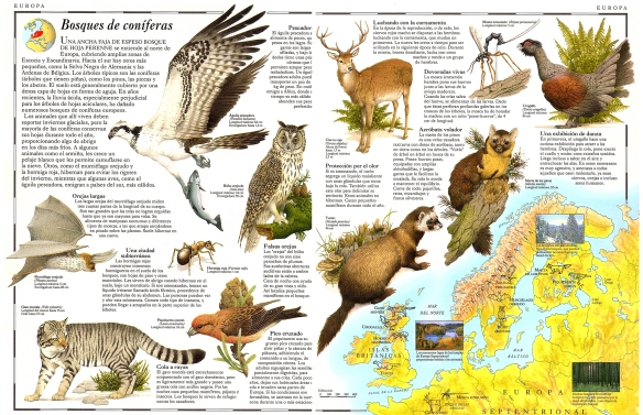 11-Europa bosques de coníferas.metirta.online