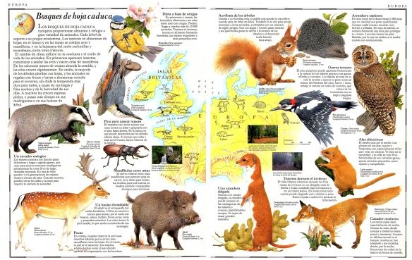 22-Europa. Bosques de hoja caduca.metirta.online