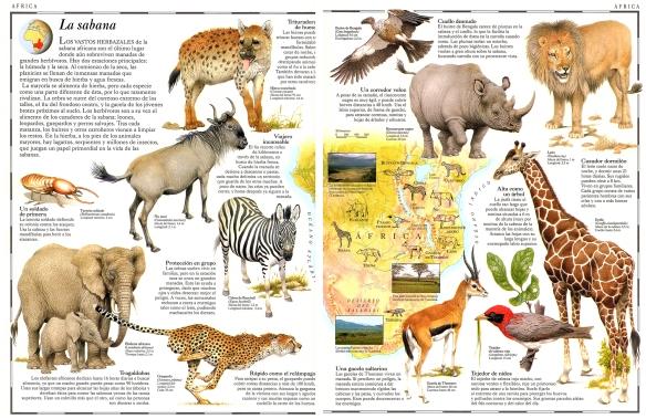 33-La sabana africana